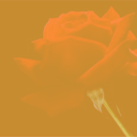 candla cane | Social Profile