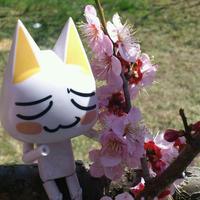花竹輪 嵐の庭の 雪にょさん | Social Profile