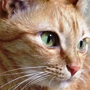 月見猫@ときどき夏眠 | Social Profile