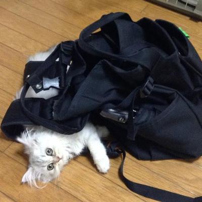 ぽこさん | Social Profile