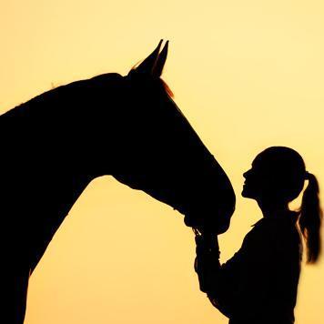 Horse Tack Company