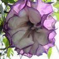 datura_math | Social Profile