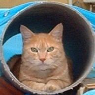 猫魔にゃろうとキャピタリズム Social Profile