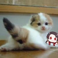 円まどか/14日(日)西き22a | Social Profile