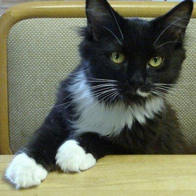 HOOTe CAT | Social Profile