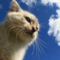 CatNA | Social Profile