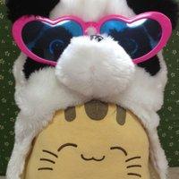 帽子をかぶった猫 | Social Profile