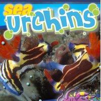 Sea Urchins   Social Profile