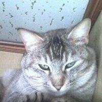 灰猫   Social Profile