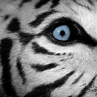 Tigress Lyn Reow | Social Profile