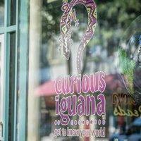 Curious Iguana   Social Profile