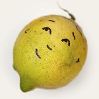 Fallen Fruit   Social Profile