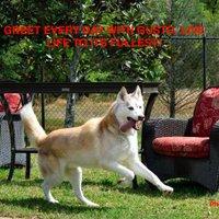 Florida Husky Rescue | Social Profile