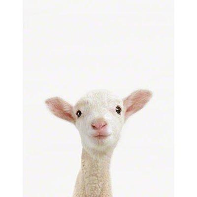 迷羊 | Social Profile