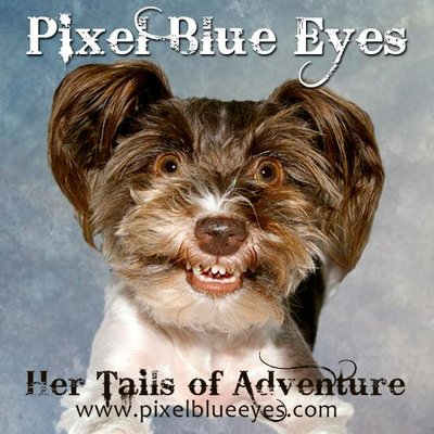 Pixel Blue Eyes | Social Profile