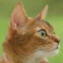 護国寺 Social Profile