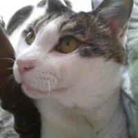 猫野ツミキ | Social Profile