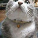 猫 のチビ (@012Chibi) Twitter