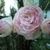@roseflower117