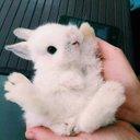 토끼 깡총깡총! (@00_98_) Twitter