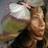 The profile image of kkrpray7