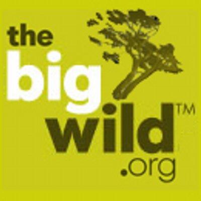 TheBigWild | Social Profile