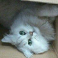 ふっぴー | Social Profile