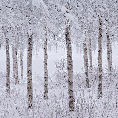 겨울 나무들 | Social Profile
