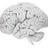 Gehirn normal