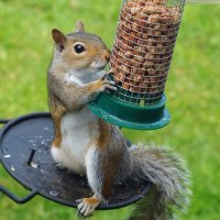 @squirrel_modern