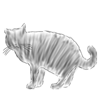 /bin/cat   Social Profile