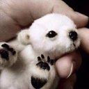 Baby Animals 🐶
