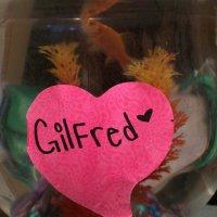 @Gilfred_