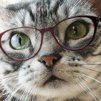 棗猫 | Social Profile