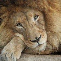 Aslan's Friend | Social Profile
