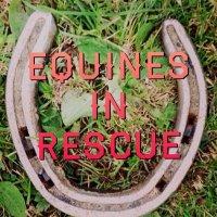 Equines In Rescue | Social Profile