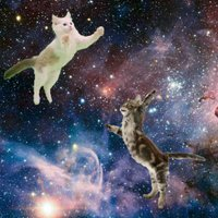 CatsLoveSpace