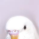 Birds tho