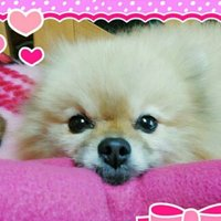 ♪★*☆masae・゚'☆♪ | Social Profile