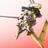 The profile image of RopeDaSo