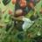 The profile image of shotch0501