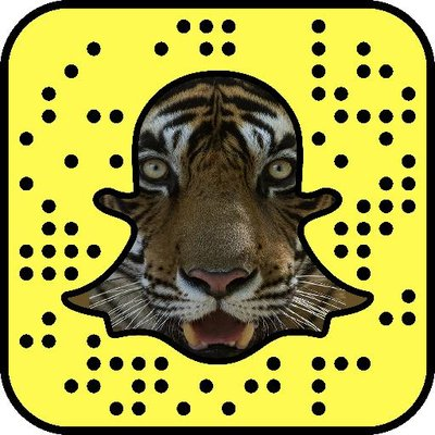 Tigers for Tigers | Social Profile