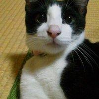 あんこ | Social Profile