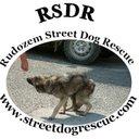 Rudozem Street Dogs