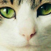 ソッフィー | Social Profile