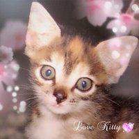 Ikeda♡Kitty | Social Profile