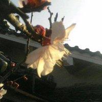 藍杏 | Social Profile