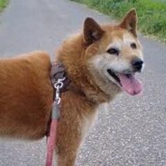 柴犬好きだけどねこわんだ | Social Profile