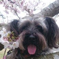 ShinichiKirin | Social Profile