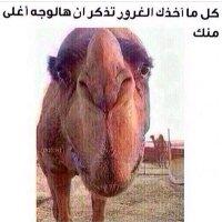 @hatemhHKM